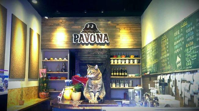 Pavona Cafe馥䕕商行